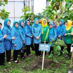 Gerakan Perempuan Tanam dan Pelihara Pohon