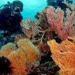 Wakatobi, Surga di Bawah Laut