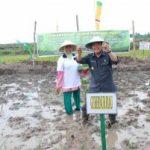 KEJAR PRODUKSI BERAS… Gubernur Tanam Bibit Perdana di Sawah Baru