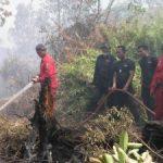 Tim Fire Fighter Riaupulp Padamkan Kebakaran Lahan