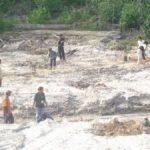 Riaupulp Estate Logas dan Cerenti Tanam Pohon di Areal Bekas Peti