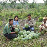 Petani Binaan Riaupulp di Desa Olak Panen Semangka