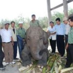 Periksa Kehamilan Gajah, Riaupulp Hadirkan Dr Hewan