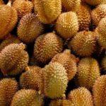Pekanbaru Kebanjiran Durian, Tapi Harga Tetap Mahal
