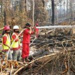 RAPP Waspadai Kebakaran di Lahan HTI